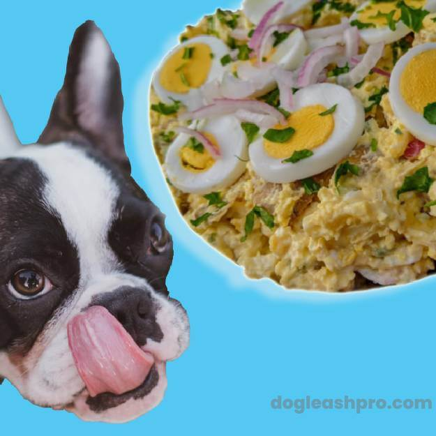 Can Dogs Eat Egg Salad