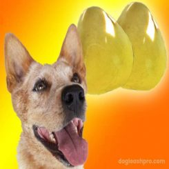 Can Dogs Eat Pomelo