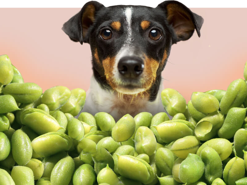 Can Dogs Eat Edamame