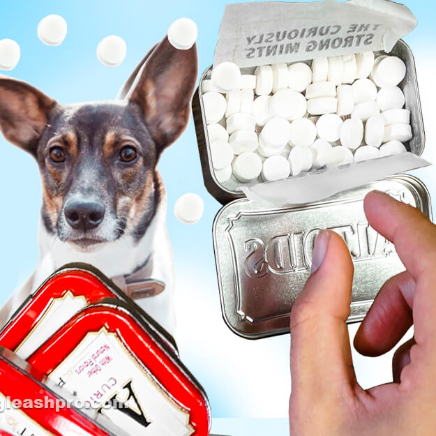 can dogs eat altoids