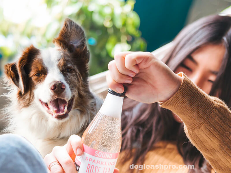 can dogs drink carbonated water