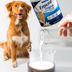 can dogs drink ensure catalog