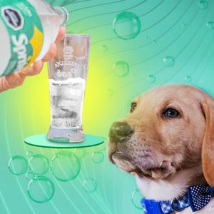 can dogs drink sprite?