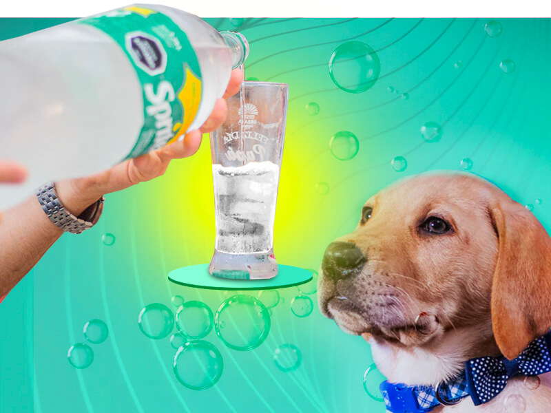 can my dogs drink sprite?