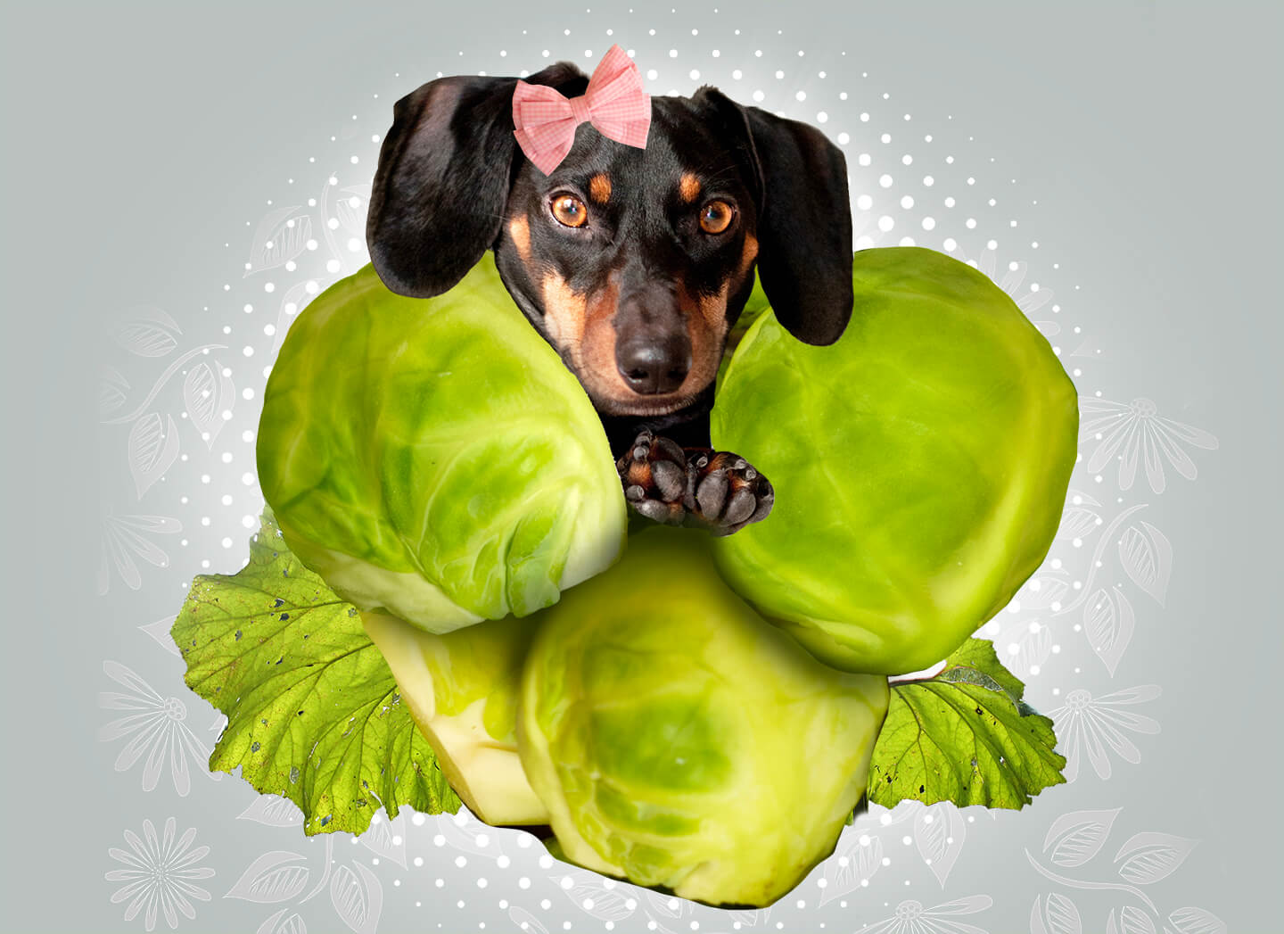healthy snacks for dogs, veggies like brussel sprouts