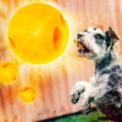 dog looking at a cheese ball