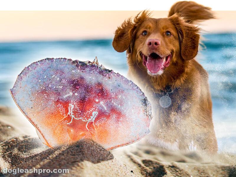 can dog eat crab shells?