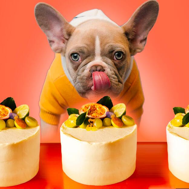 can dogs eat custard