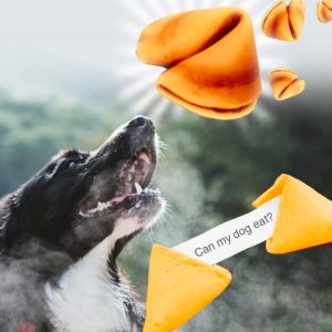 can dogs eat fortune cookies
