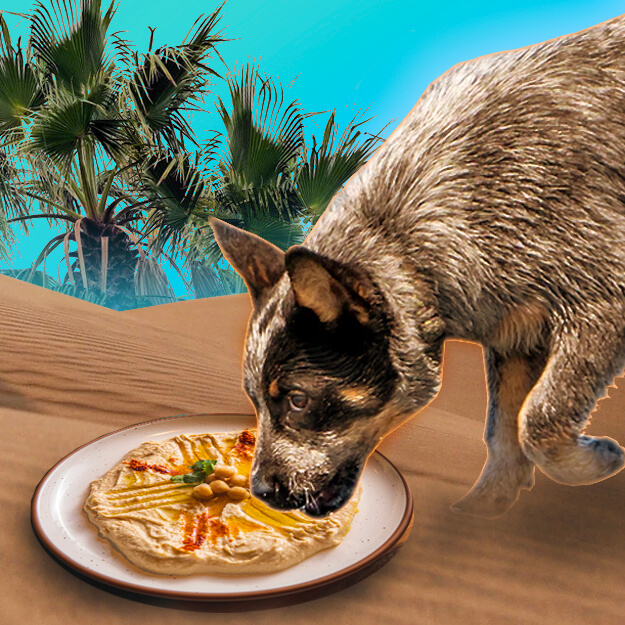 can dogs eat hummus