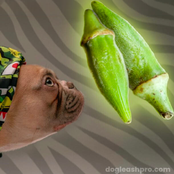 dog looking at okra and wanting to eat it