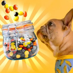 can dogs eat reeses pieces catalog
