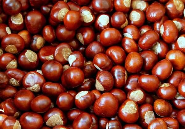 can dogs eat water chestnuts