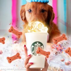 can dogs have puppuccino