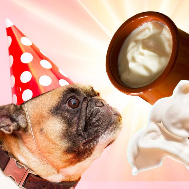 can i feed my dog sour cream hero