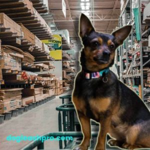 does lowes allow dogs