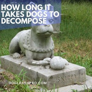 how long does it take for a buried dog to decompose
