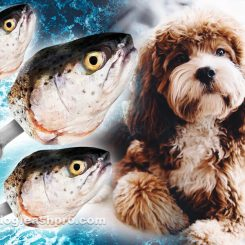 can dogs eat fish heads