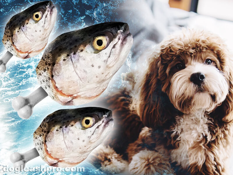 can dogs eat cooked fish bones