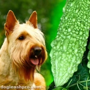 Can dogs eat bitter melon