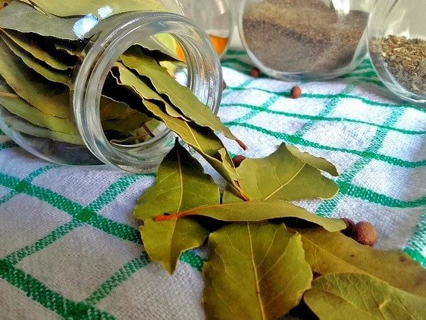 are bay leaves poisonous to dogs