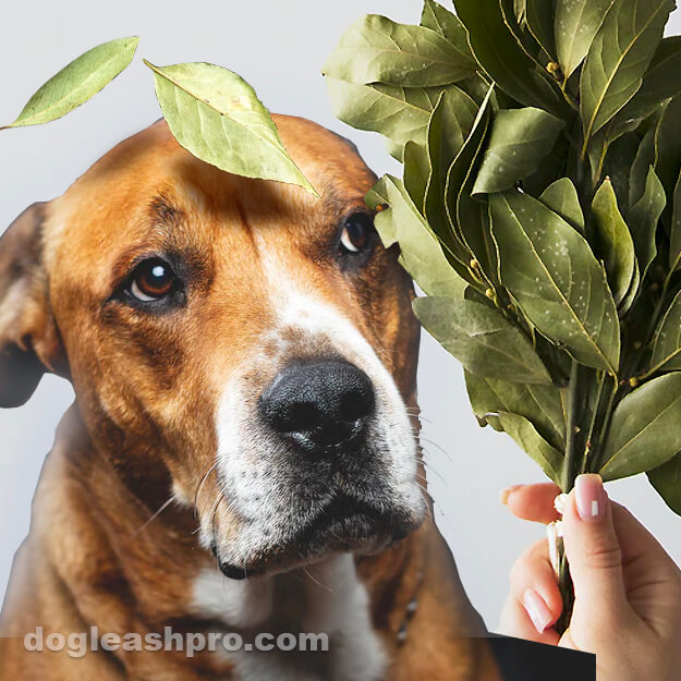can dogs eat bay leaves