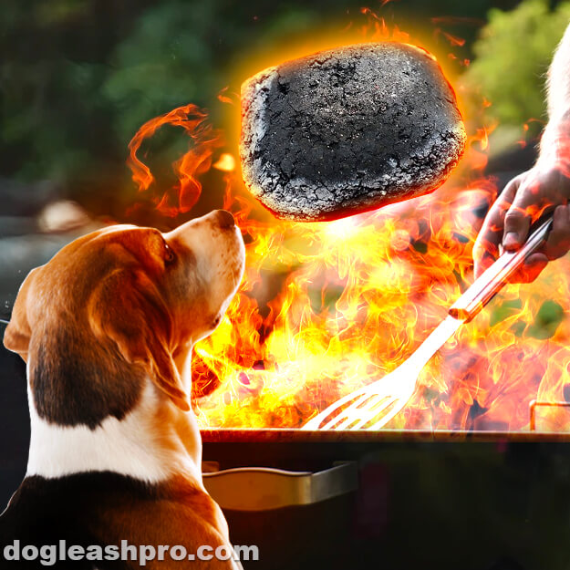 can dogs eat charcoal
