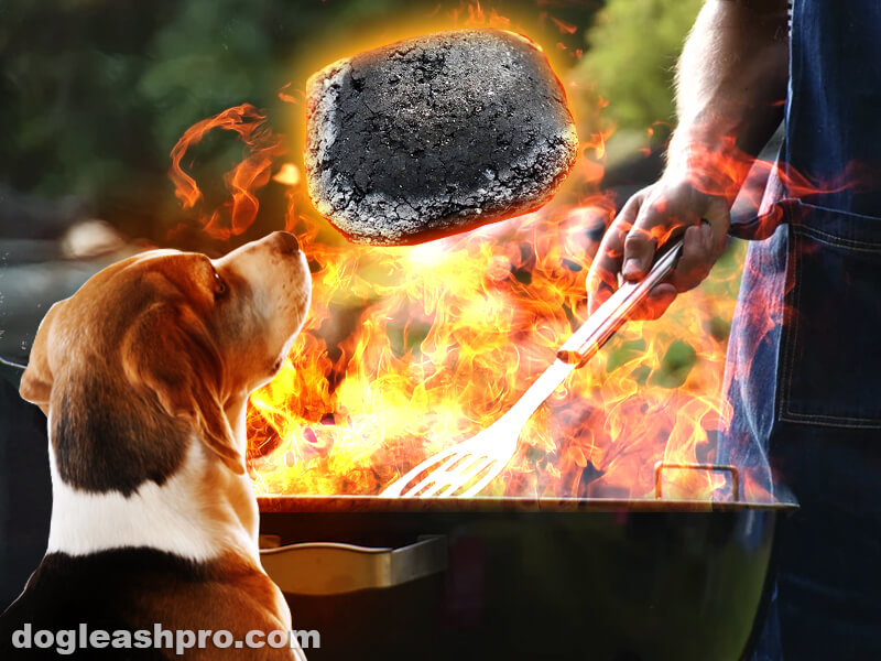 is charcoal safe for dogs
