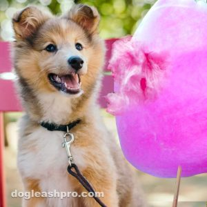 can dogs eat cotton candy