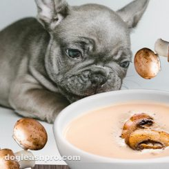 can dogs eat cream of mushroom soup cata2