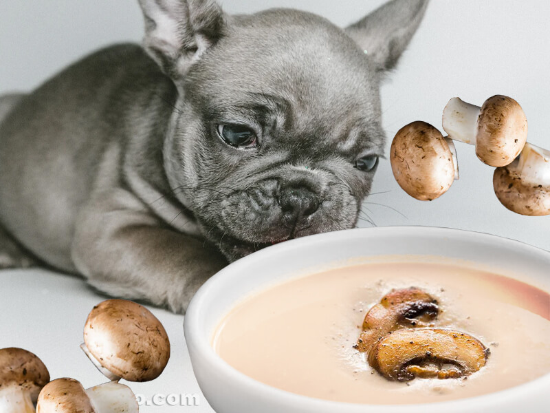 can dogs eat cream of mushroom soup
