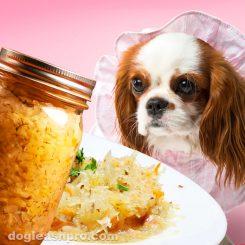 can dogs eat sauerkraut