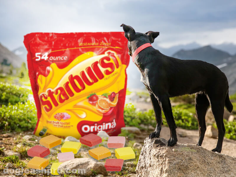 can dogs eat starburst