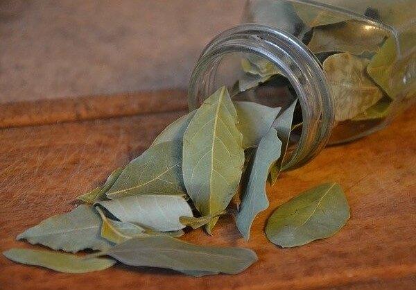 is bay leaf safe for dogs