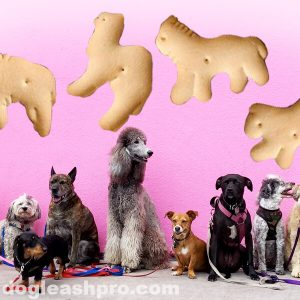 Can Dogs Eat Animal Crackers