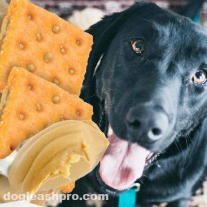 Can Dogs Eat Peanut Butter Crackers