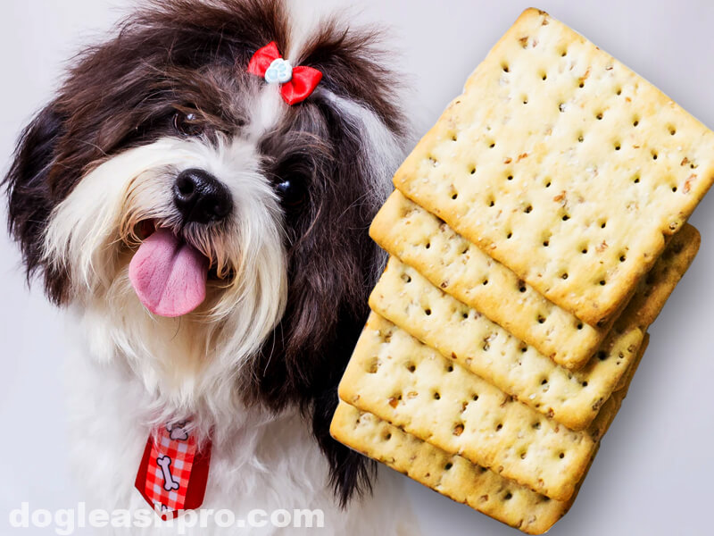 Can Dogs Eat Saltine Crackers