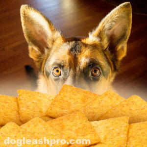 Can Dogs Eat Wheat Thins