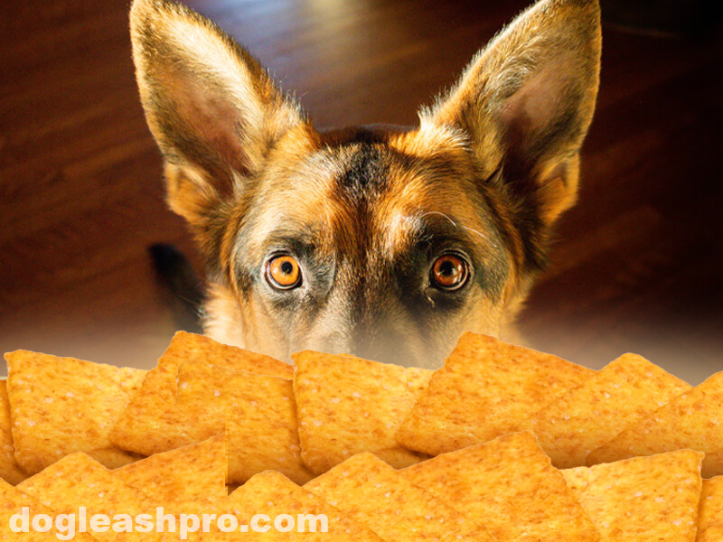 can dogs eat wheat thin crackers