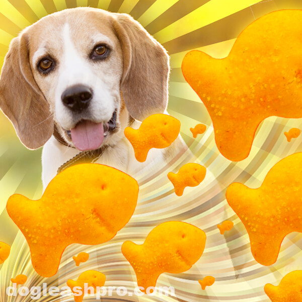 Can dogs eat Goldfish