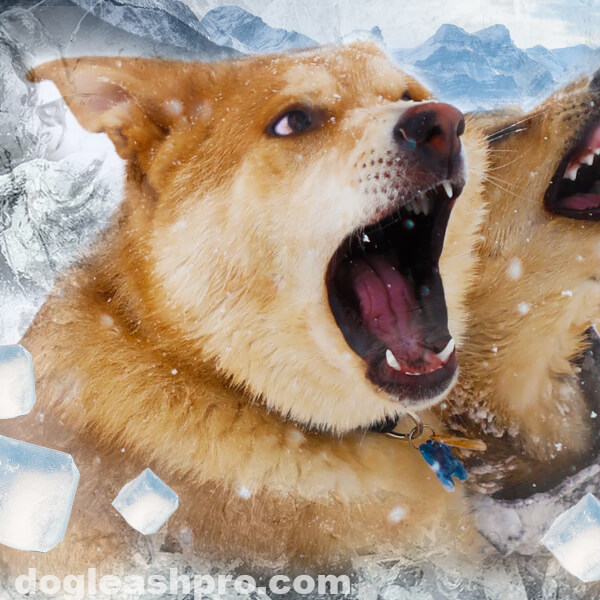 Can dogs get brain freeze