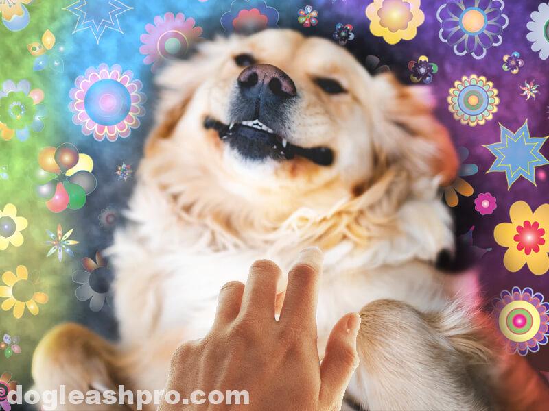 Do Dogs Purr