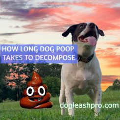 How Long Does It Take For Dog Poop To Decompose
