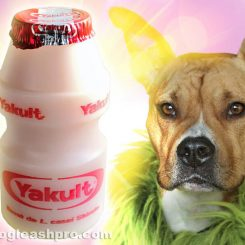 can dogs drink yakult cata