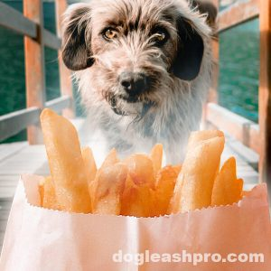 can dogs eat hot chips hot fries