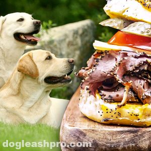can dogs eat pastrami