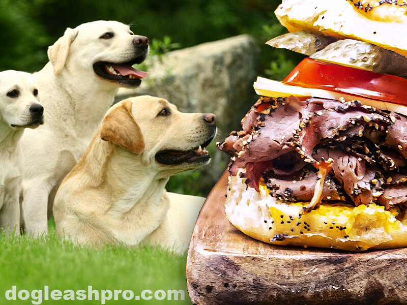 can dogs eat pastrami meat