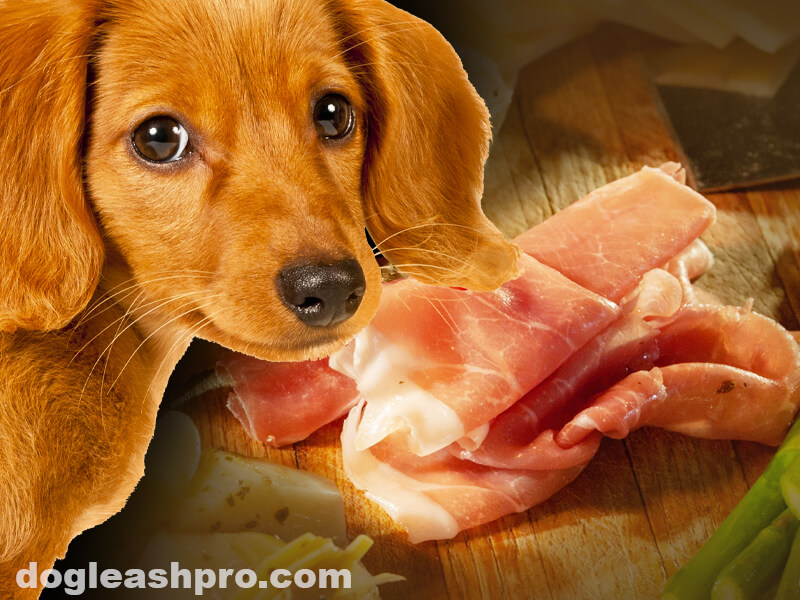can dogs eat prosciutto