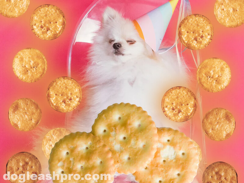 can dogs eat ritz crackers