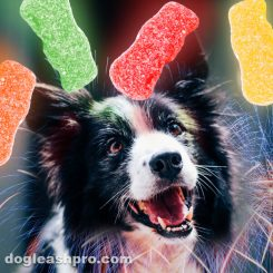 can dogs eat sour patch kids